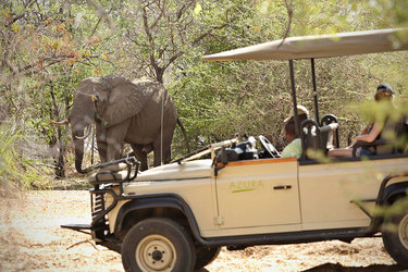 Elephant sighting on game drive at Azura Selous in Tanzania, Africa
