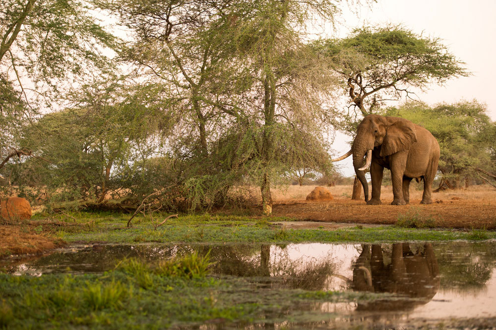 Elephant near Singita Pamushana Lodge in Malilangwe Wildlife Reserve, Africa