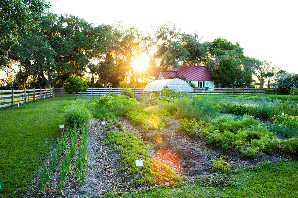 The farm to table garden at Greyfield Inn in Golden Isles, Georgia.