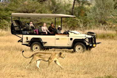 A lioness sighting on a game drive from Azura Selous in the Selous Game Reserve, Tanzania