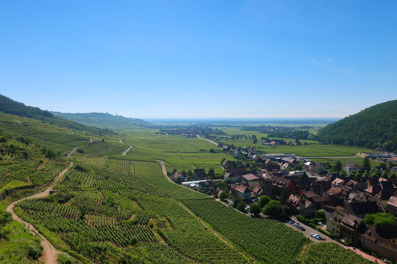 The Best of Alsace