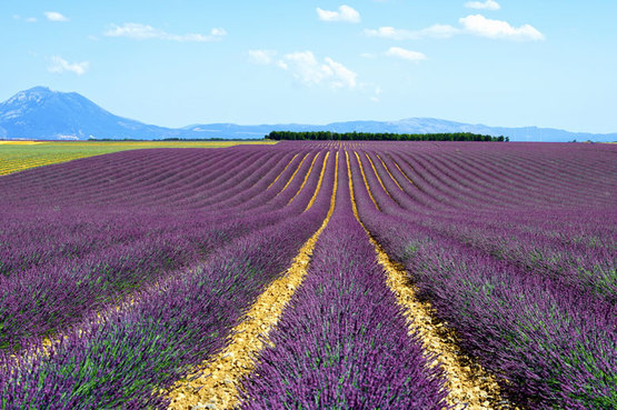 8-Day Provence Itinerary