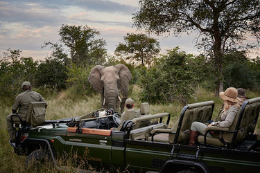 A safari expedition encounters an elephant at Royal Malewane in South Africa