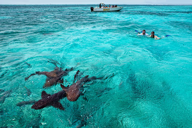 Swimming with sharks off the coast of Cayo Espanto in Belize